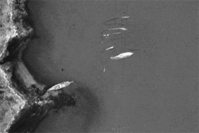 Aerial view of unidentified wrecks in the Potomac